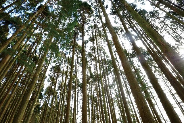 みゆきホームの家は木曽檜を使用